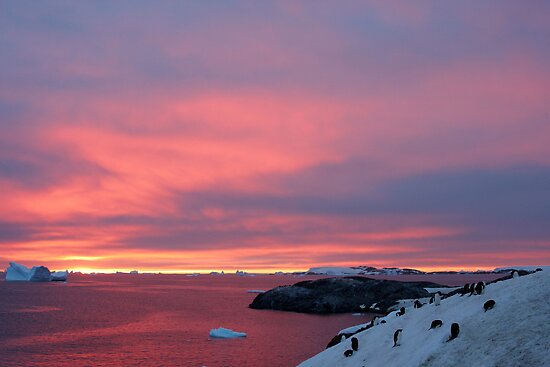Antarctic Sunset by Robert Elliott