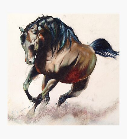 Wild stallion  Photographic Print