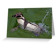 Splashing Around Greeting Card