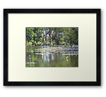 Water Lily in Billabong Framed Print