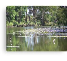 Water Lily in Billabong Canvas Print