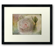 Tribute to a Rose Framed Print