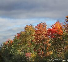 Autumn Road  by Marie  Cardona