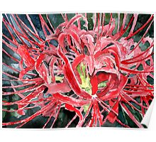 spider lily flower art prints Poster