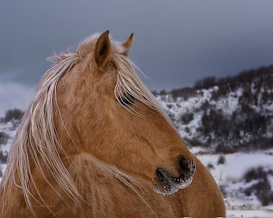 Winter Palomino by Kathy Cline