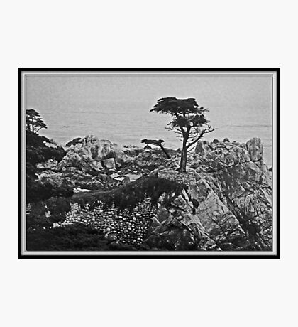 Cypress Point Photographic Print