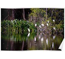 Egrets At Rest Poster