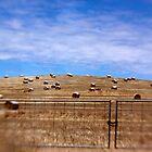 Hay Bales by Pene Stevens