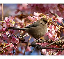 A Bushtit and Her Domain of Pink Photographic Print