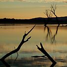 Dead Trees, Lake Fyans, Grampians. by Joe Mortelliti