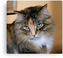 Bold Ruler of The House, Tabby/Maine Coon Canvas Print