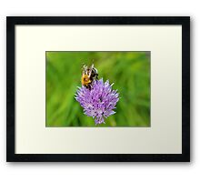 Bee & Chives Framed Print