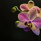 Orchids by George Davidson