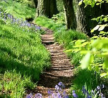 Spring path by John Keates