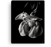Snail Flower in Black and White Canvas Print
