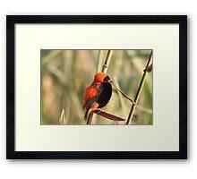 Red Bishop Framed Print