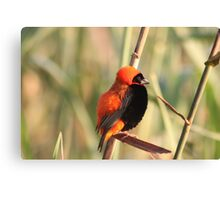 Red Bishop Canvas Print