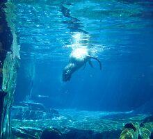 Diving by Vanessa Brady