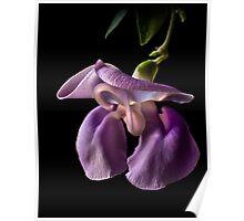 Snail Flower Poster