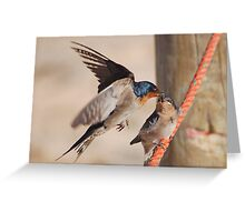 Welcome Swallows Monkey Mia Western Australia Greeting Card