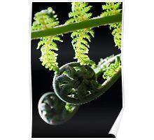 Macro Ferns Poster
