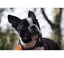 Thoughtful Dog Photographic Print