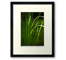 Sun Kissed Grass Abstract Framed Print