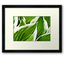 Green Leaves Nature Abstract Framed Print