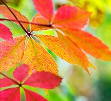 Autumn Colors by Christina Rollo