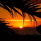Sunset through the palms by fourthangel