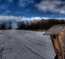 Gone South for the Winter by Nate Welk