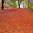 Walking the Russet Carpet by bhutch7
