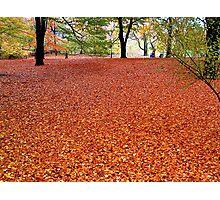 Walking the Russet Carpet Photographic Print