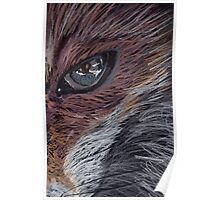 Fox Eye Poster