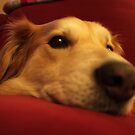 saz on the sofa by xxnatbxx