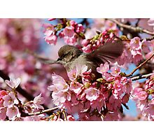 Springtime Makes Me Want to Spread My Wings Photographic Print