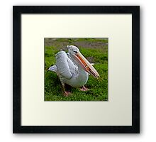 A Wonderful Bird is the Pelican... Framed Print