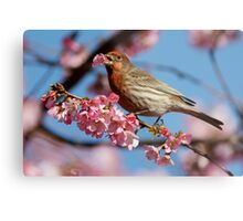 Would You Care For a Blossom? Metal Print