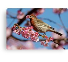 Would You Care For a Blossom? Canvas Print