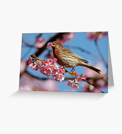 Would You Care For a Blossom? Greeting Card