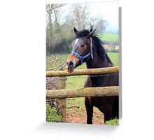 Chatting over the fence Greeting Card