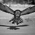 Great Grey Owl B&amp;W by Jim Cumming