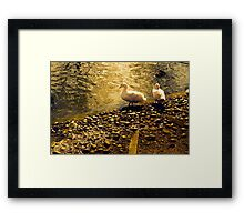 Two Duckies Framed Print
