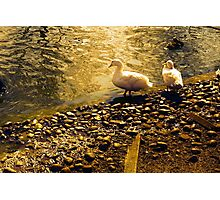 Two Duckies Photographic Print