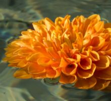 Floating Autumn - Chrysanthemum Blossom in the Fountain Sticker
