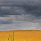 Fields on a stormy weather by snehit