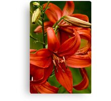 "Asiatic Lily ""Red Tiger"" Canvas Print"