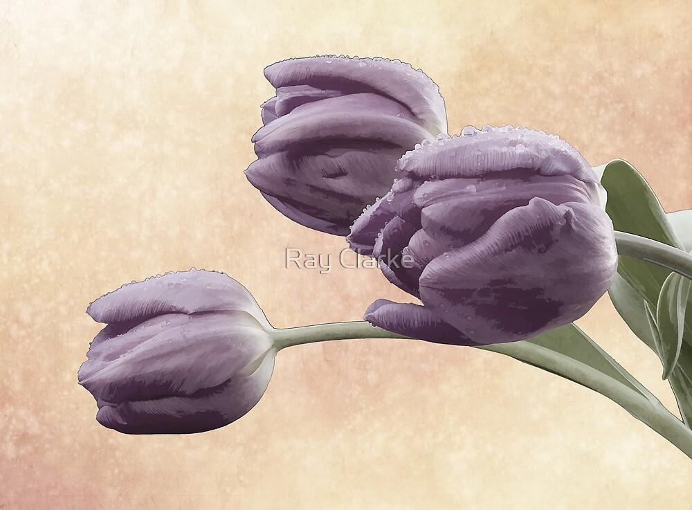 Painted Tulips by Ray Clarke