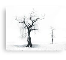 Old Tree, Young Tree Canvas Print
