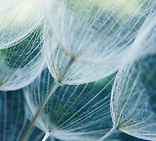 Wispy #3 by Laurie Minor